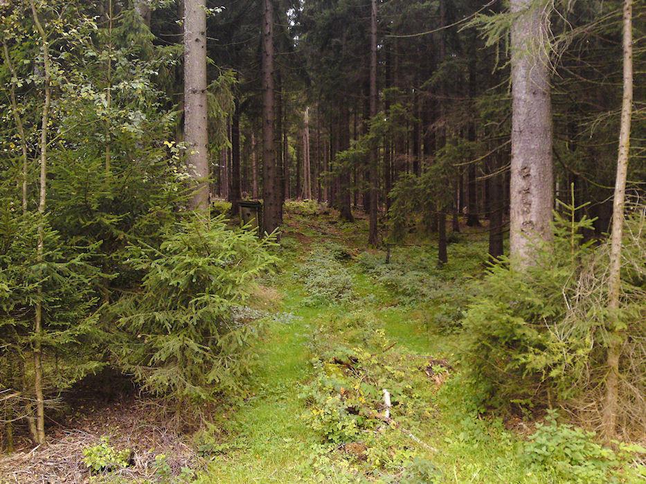 auf dem Rückweg entdeckt...Herzchenhäusle..mitten im Wald