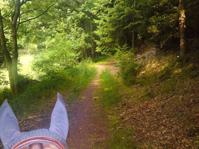 Reitweg bei Fischbach