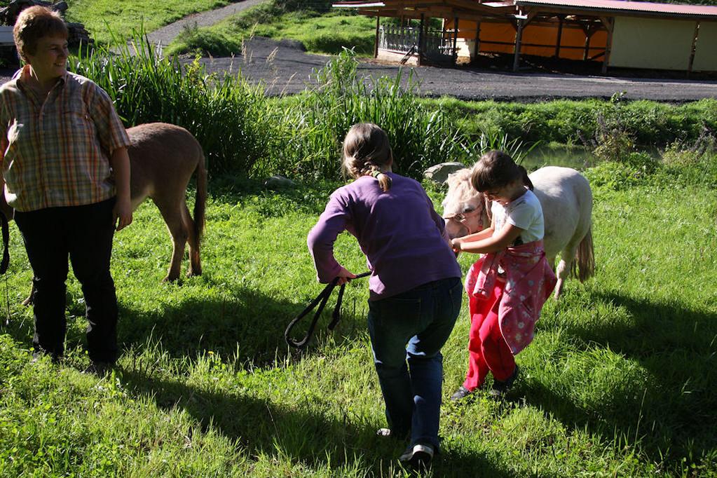 Esel und Pony