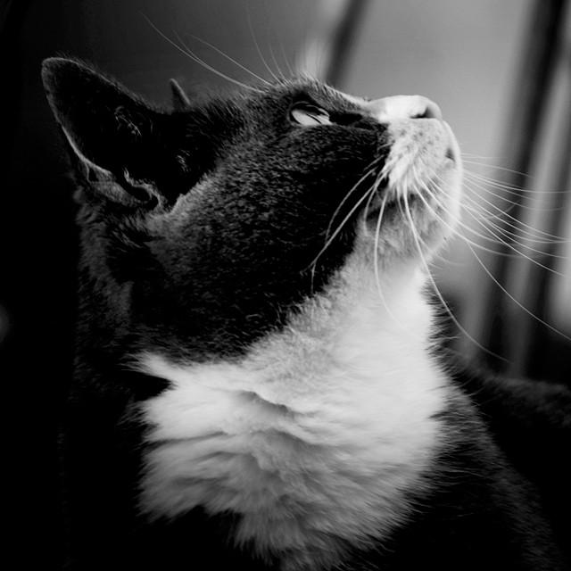 Frau Salander, Katze, cat, AincaArt, Ainca Gautschi-Moser, Foto und Text, Writer, Photographer, www.aincaart.ch, Quersatz,