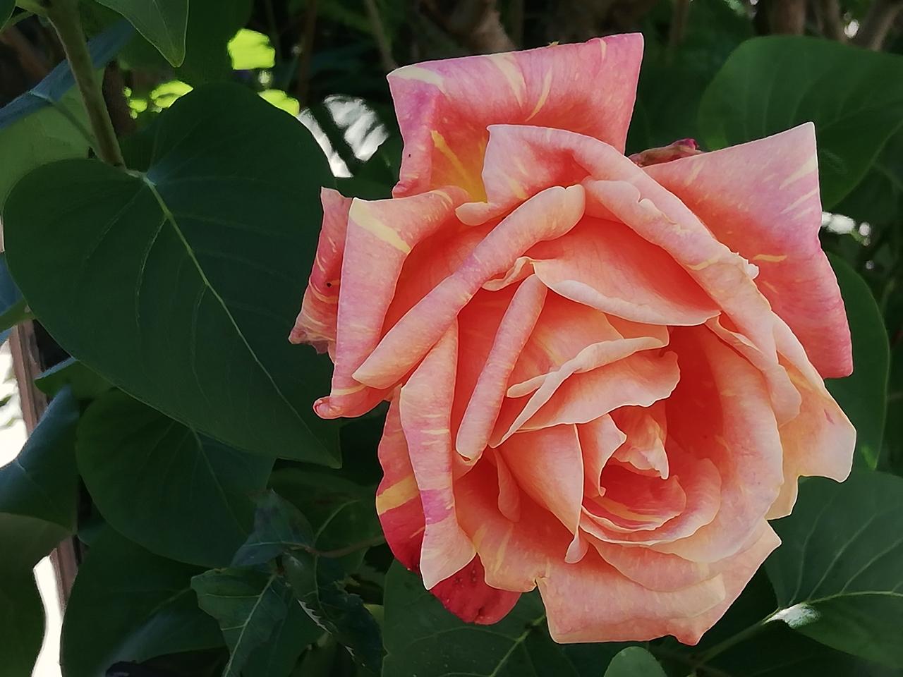 Schönheiten rund herum - Beauties around us