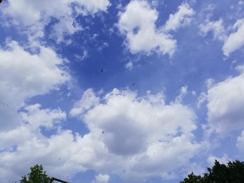 Störche fliegen - Storks are flying