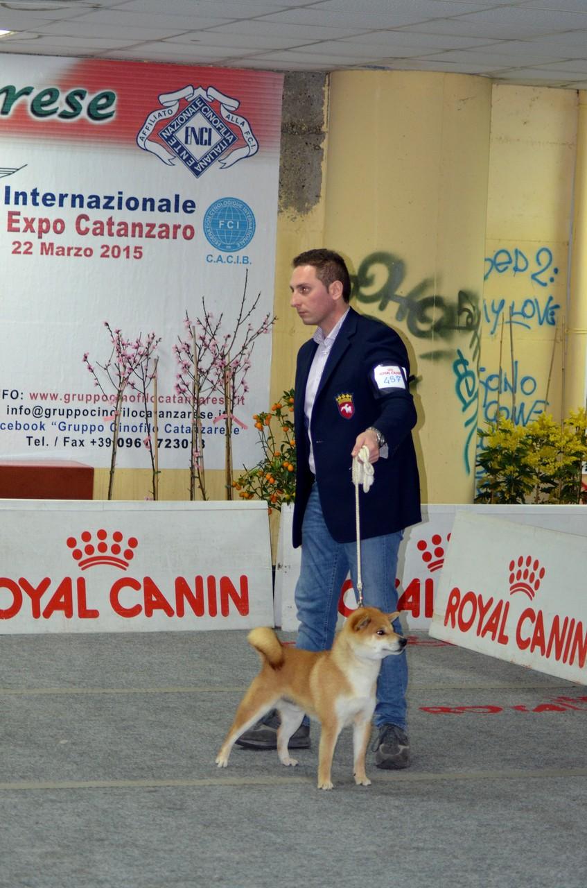 """RYU di Casa Savoca """" Expo Nazionale Crotone 1° Eccellente C.A.C 21/03/15"""""""