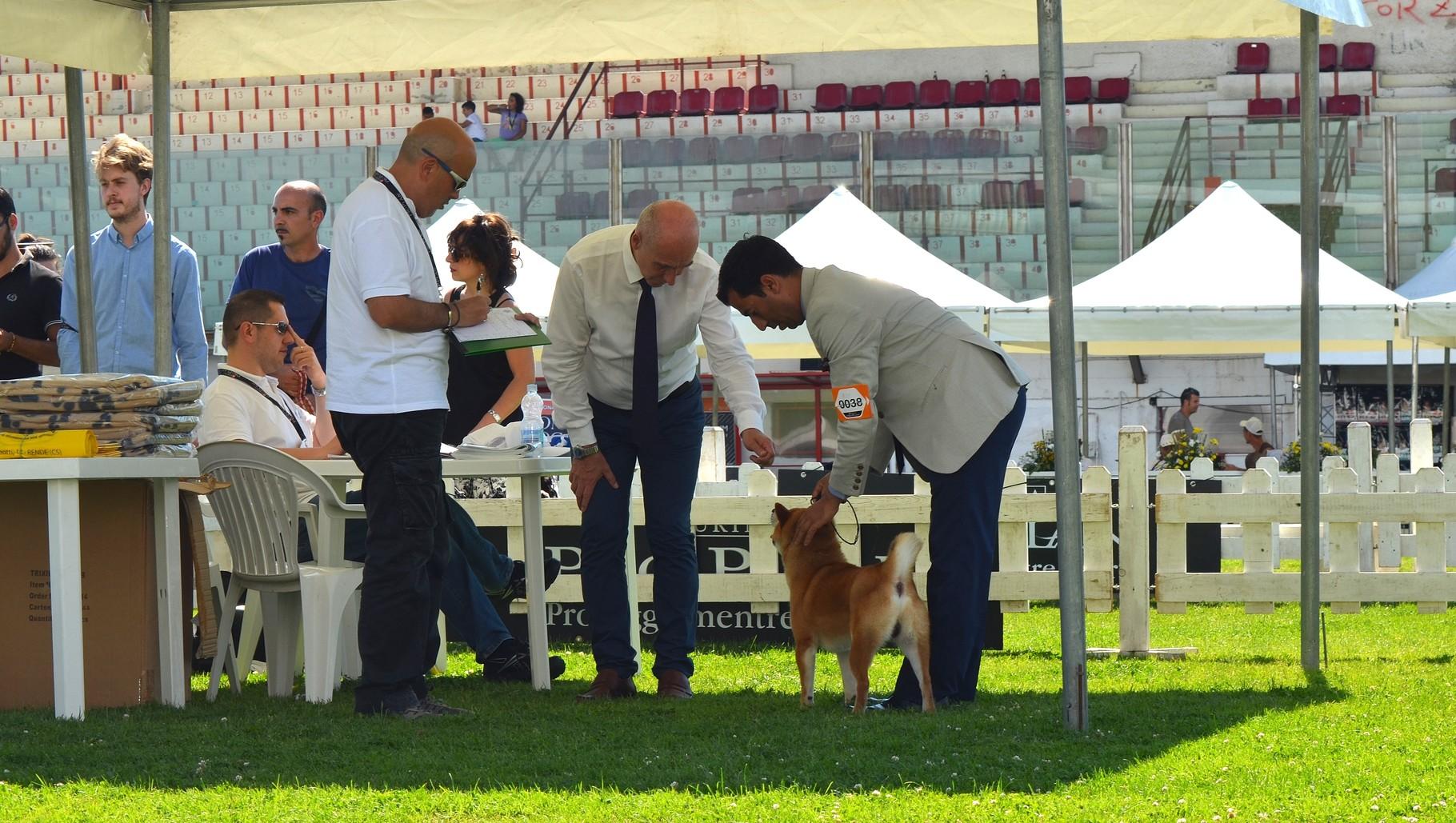 """RYU di Casa Savoca """" Expo Internazionale di Rende 1° Eccellente"""" 20/06/15"""