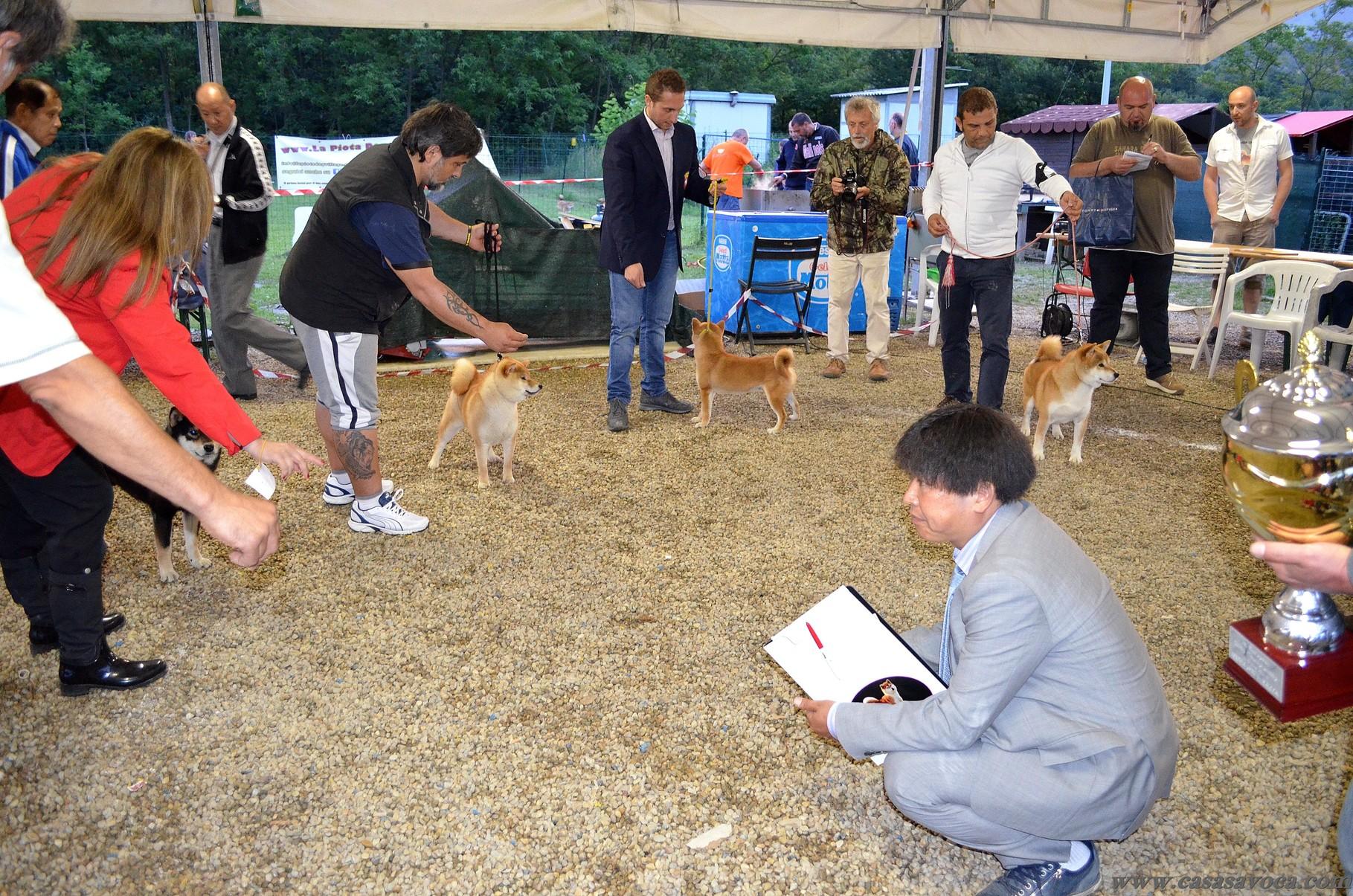 1* European Shiba Championship 14/06/14