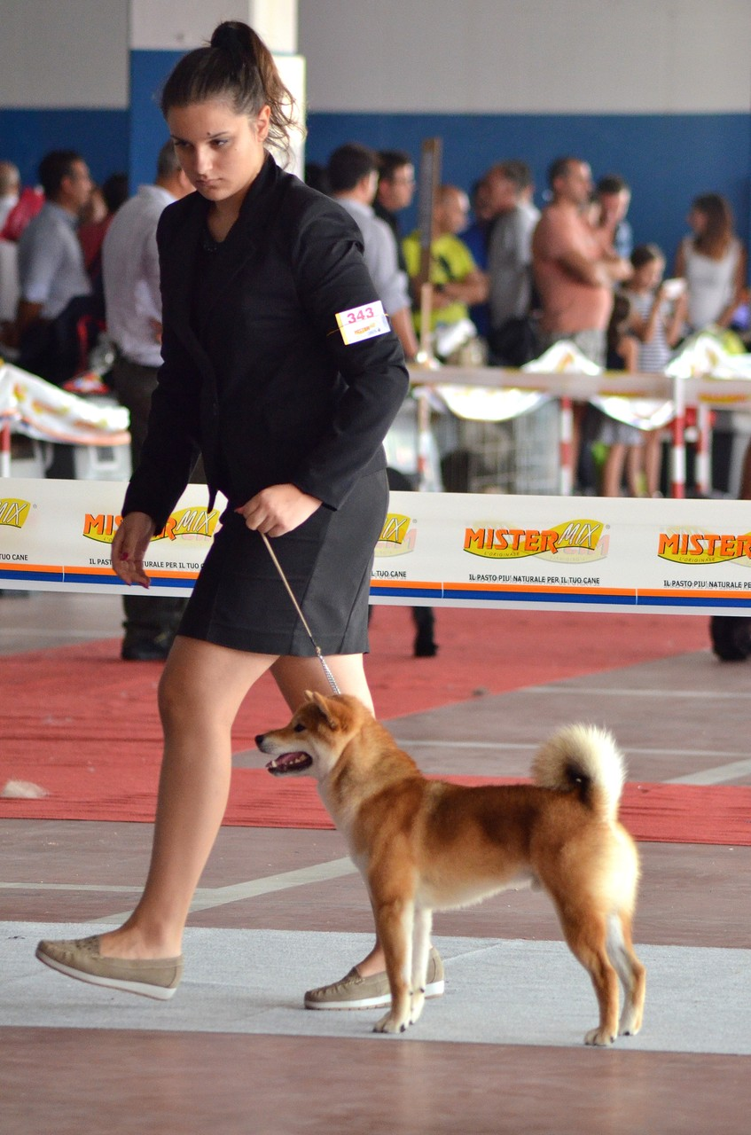 """Bring Me Luck Katsuro """" Expo Nazionale Caltanissetta 1° Eccellente  06/09/15"""""""