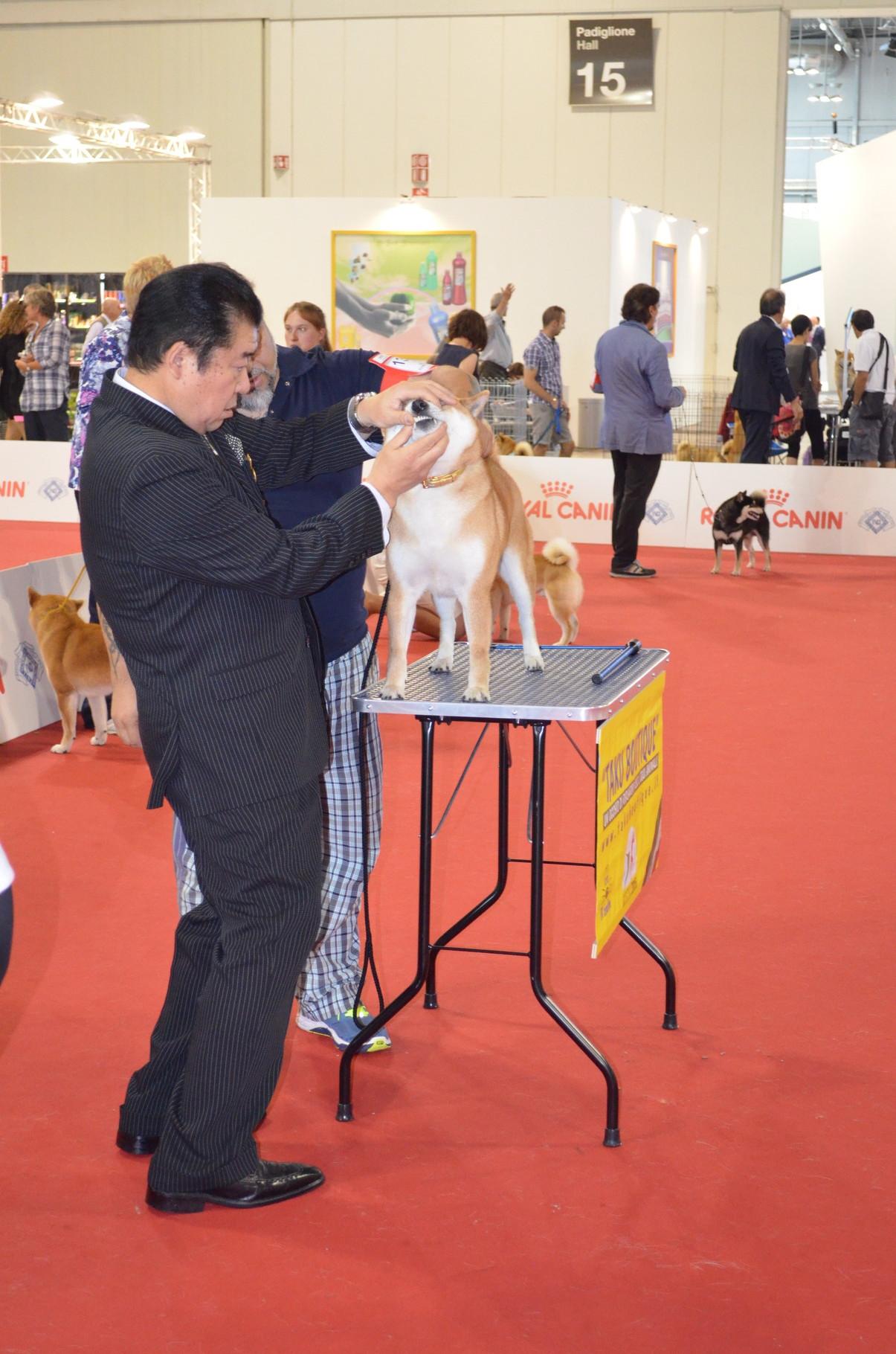 """RYU di Casa Savoca """" World Dog Show Milano 2015 1° Eccellente""""."""