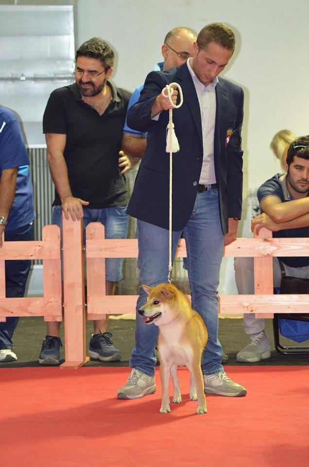 "RYU di Casa Savoca "" Expo Internazionale di Messina- R. Calabria  1° Eccellente C.A.C- C.A.C.I.B- B.O.B 18-19/10/14"""