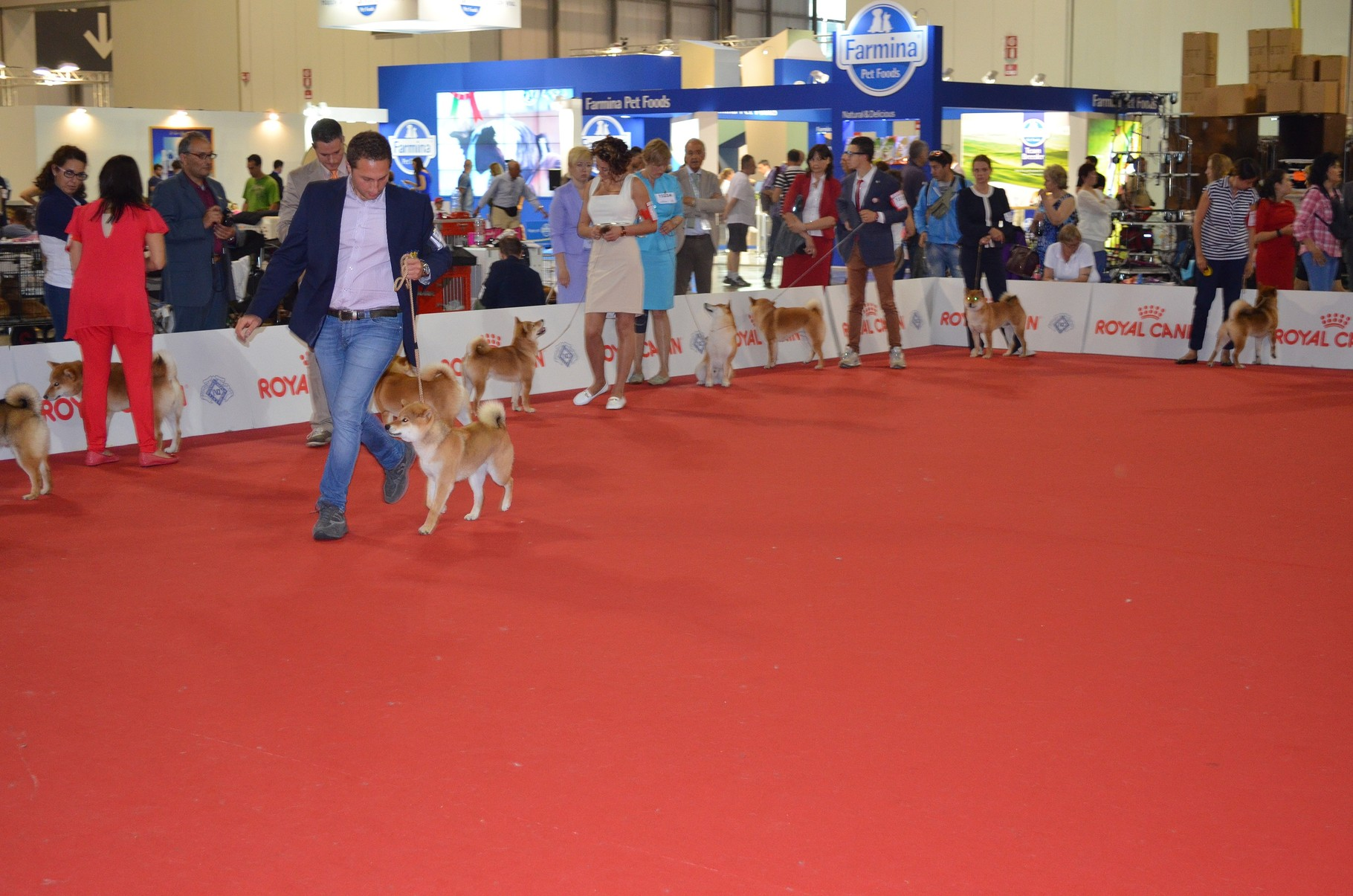 "Bring Me Luck Katsuro "" World Dog Show Milano 2015 1° Eccellente""."