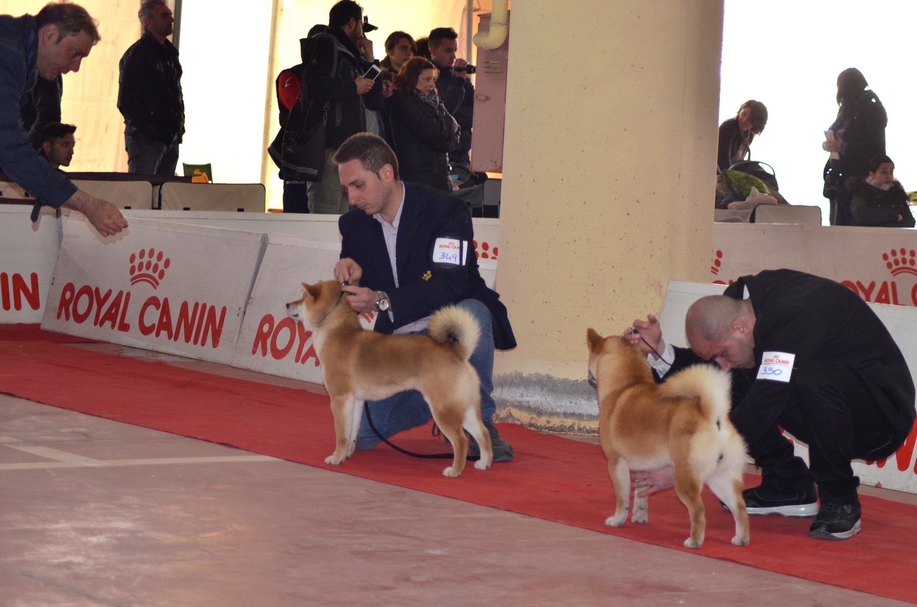 "RYU di Casa Savoca "" Expo Internazionale di Catanzaro 1° Eccellente C.A.C- C.A.C.I.B- B.O.B 22/03/15"""