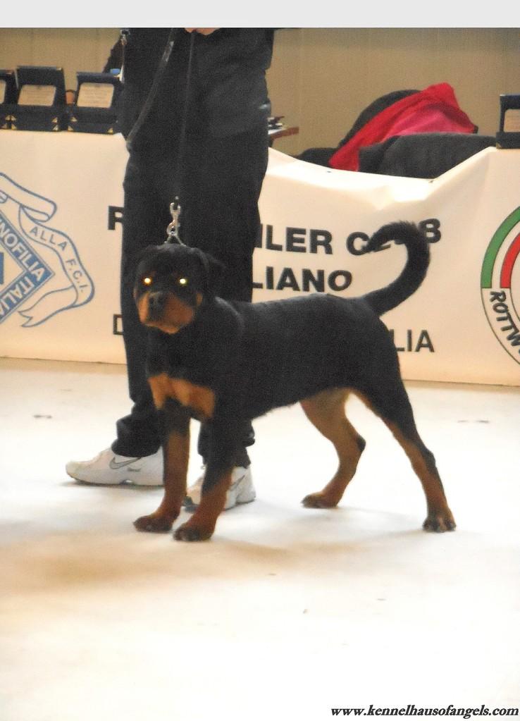 """Expo internazionale di Ragusa """"speciale di razza"""""""