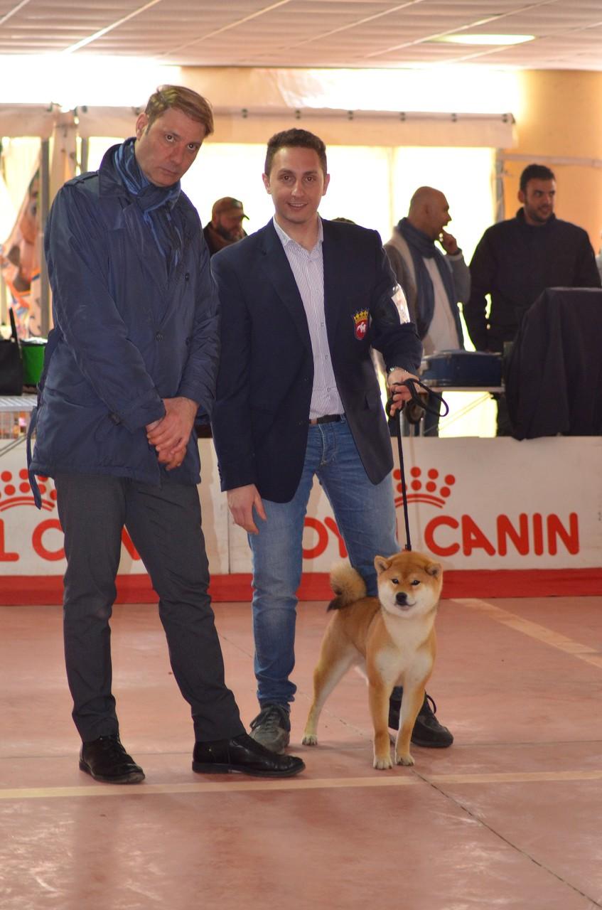 """KATSURO di Casa Savoca """" Expo Internazionale di Catanzaro 1° Eccellente C.A.C- C.A.C.I.B- B.O.B 22/03/15"""""""