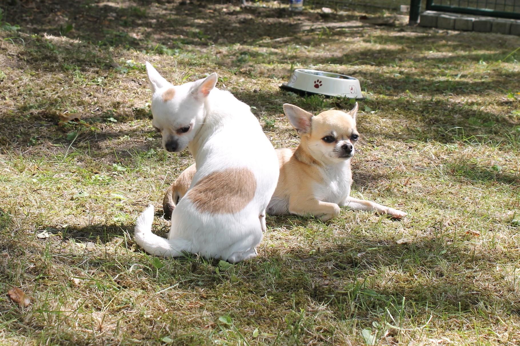 Dilara und Layla
