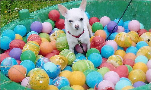 Isabella in der Hundeschule