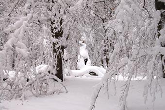 Der Naturpark Darßer Wald in Schnee gehüllt