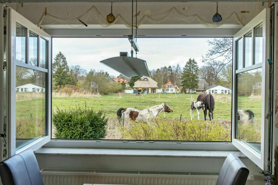Ausblick vom Esstisch der Ferienwohnung auf die angrenzende Pferdewiese