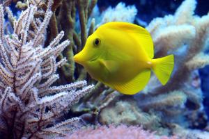 Phu Quoc marine life