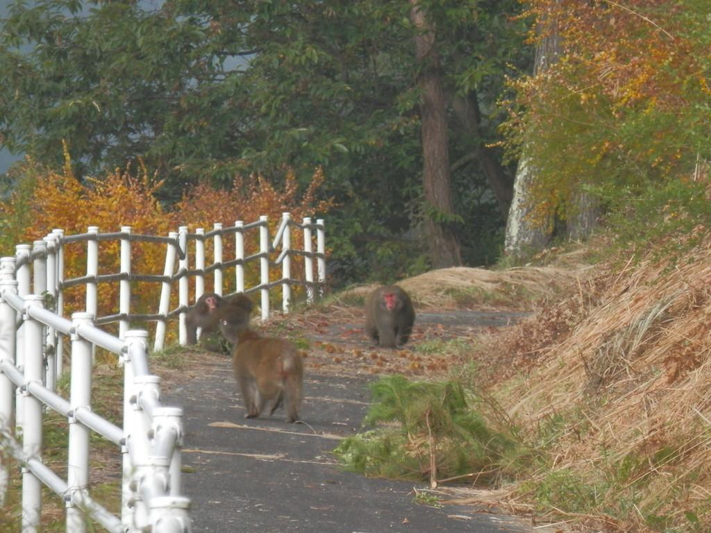 秋にはサルもクリひろい
