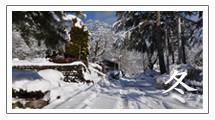 野底山森林公園 冬