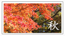 野底山森林公園 秋
