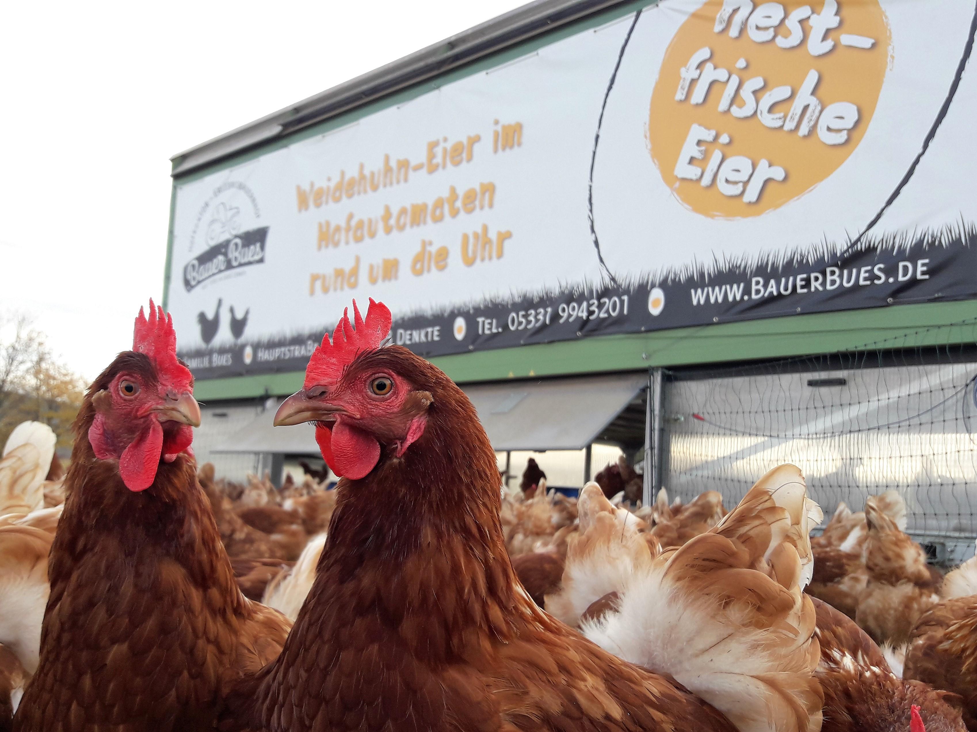Bauer Bues nestfrische Freiland-Eier