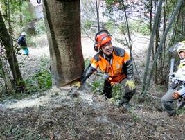 大径木シラカシ58㎝の受け口確認