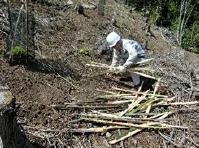 竹串を持ち運ぶ