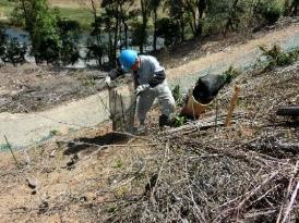 苗木を防虫ネットで覆う状況