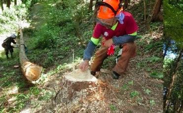 伐倒後に伐倒技術の確認