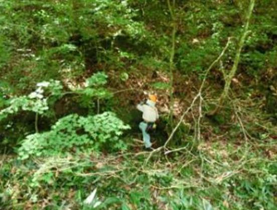 測点4周辺の急峻な地形の草刈り
