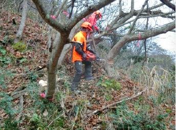 支障木の伐倒2