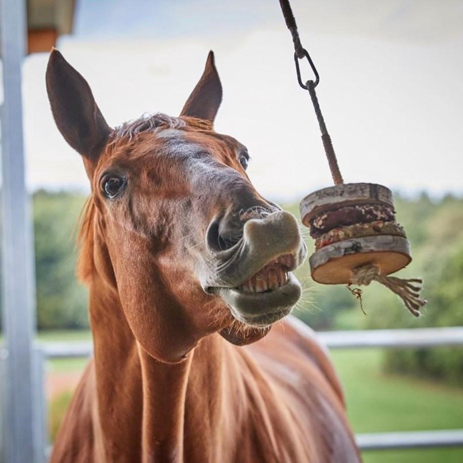Knabber Twister Spielzeug für Pferde