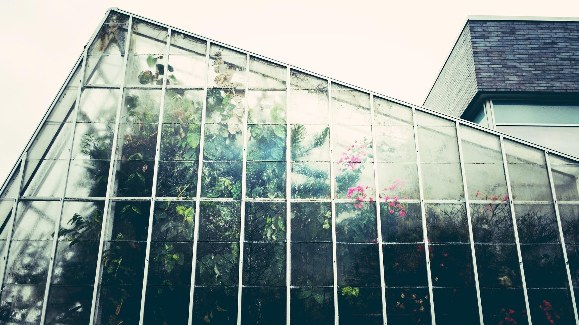 une serre douillette pour les plantes
