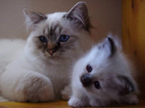 Hanuschka von Dinau mit Baby Emma