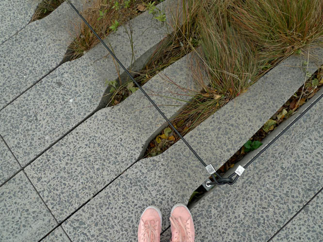 Pavement and plants