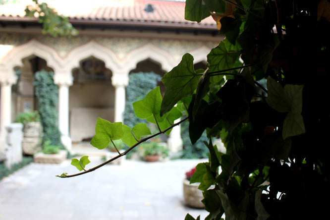 Ivy in Monastery's court yard