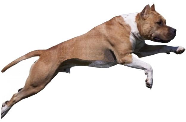 dressage chien var