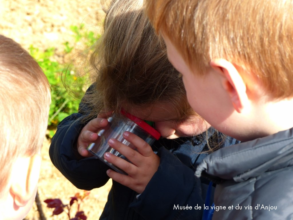 Atelier découverte faune et flore Musée vigne et vin d'Anjou