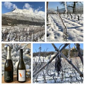 Vendanges 2016 au Domaine Vendange, vins de Savoie