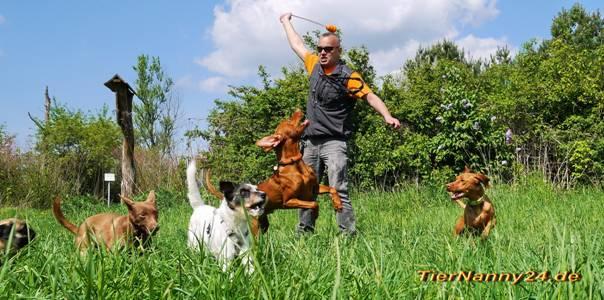 © Tiernanny24 #Hundebetreuung #Reinickendorf