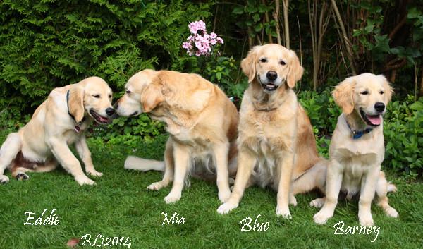 Vom Abenteuer, vier Hunde aufs Bild zu bannen:Die beiden E-Jungs mit Omi und Mama
