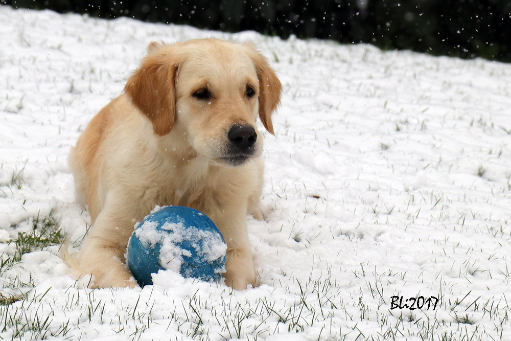 Der erste Schnee des Winters