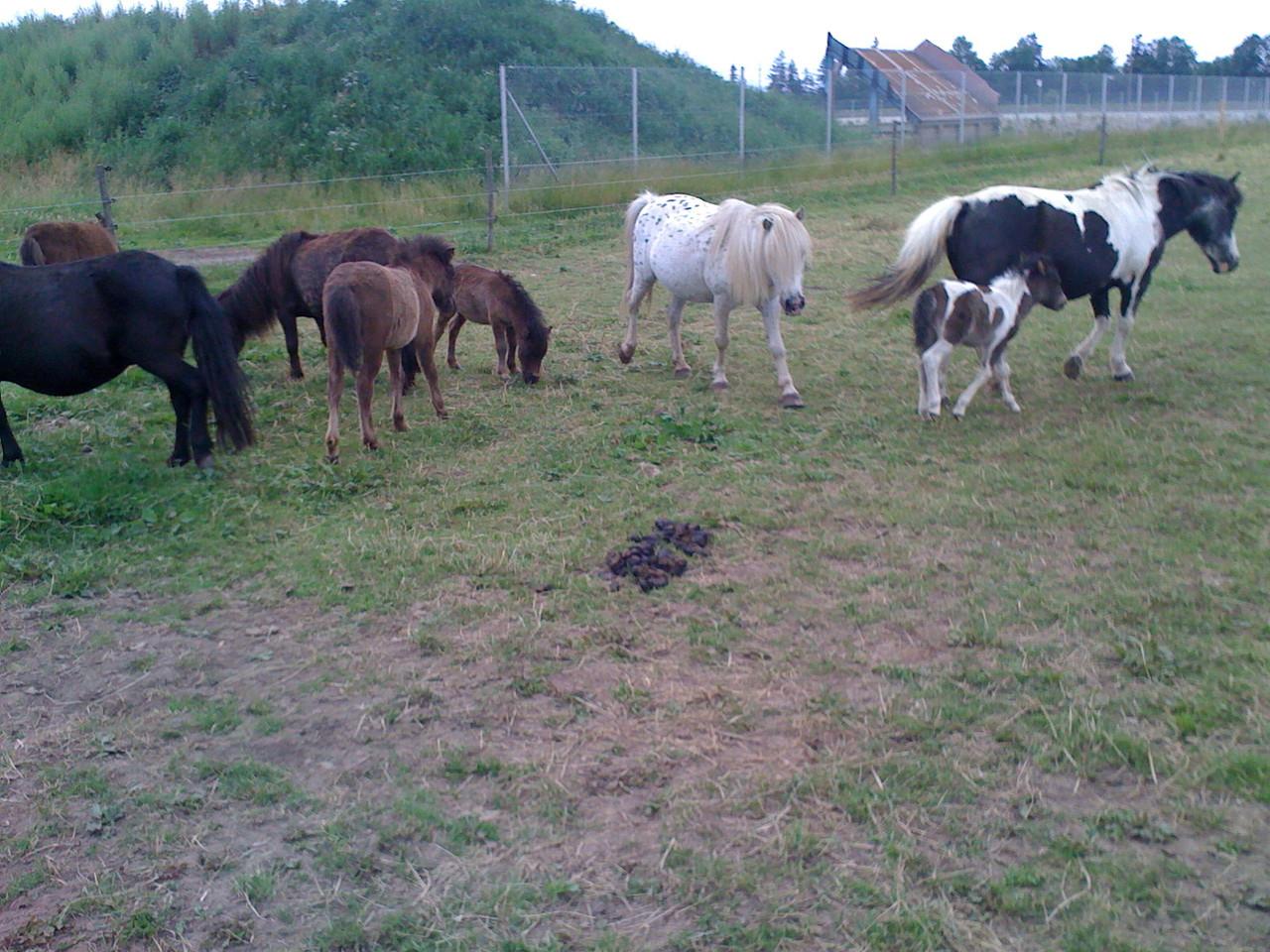 In der Herde Sommer 2012