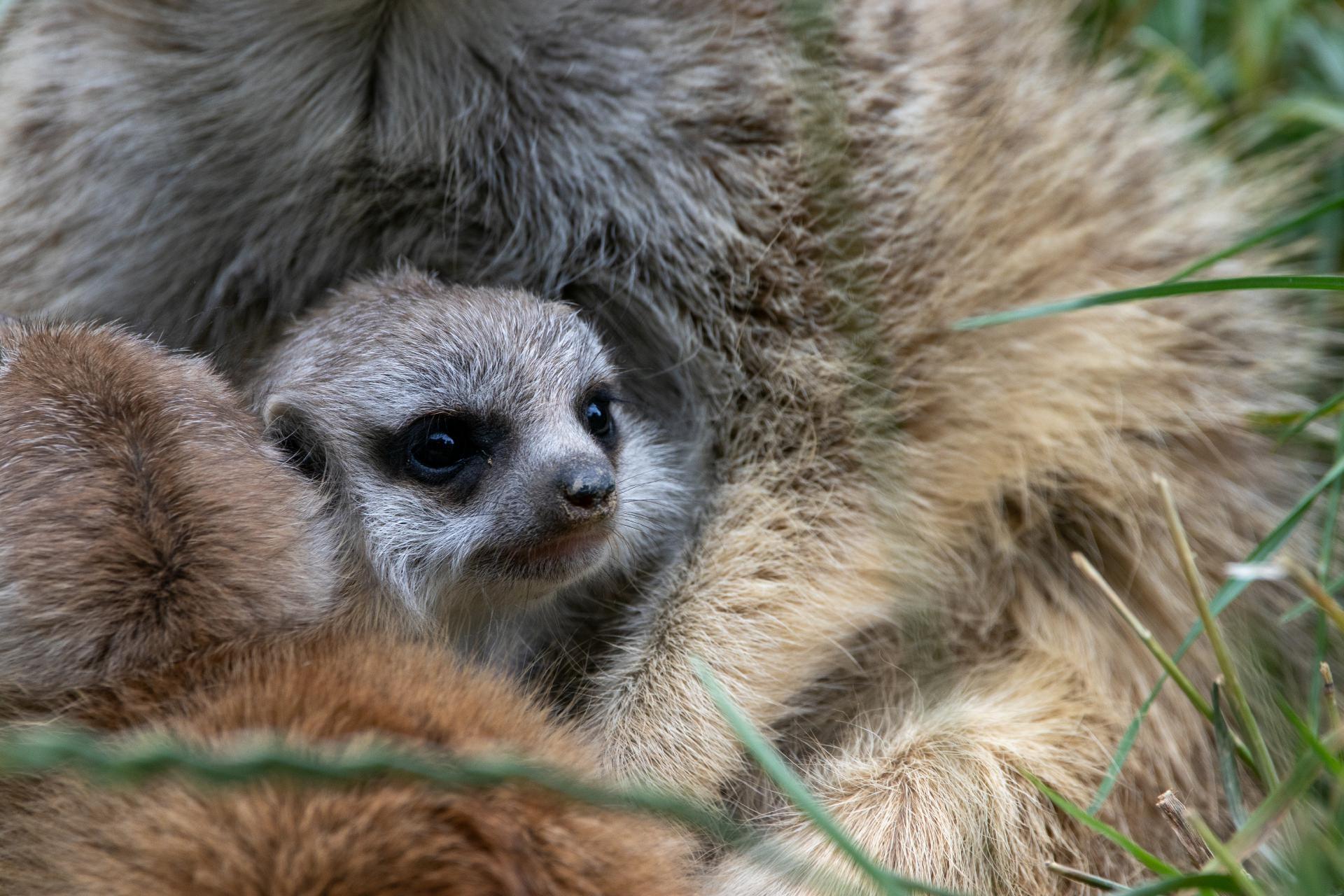 Opel Zoo by Michelle
