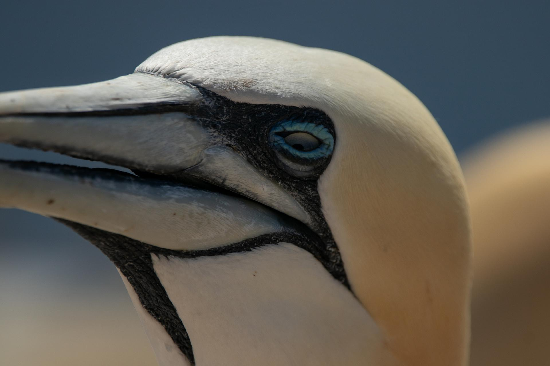 Helgoland by Michelle