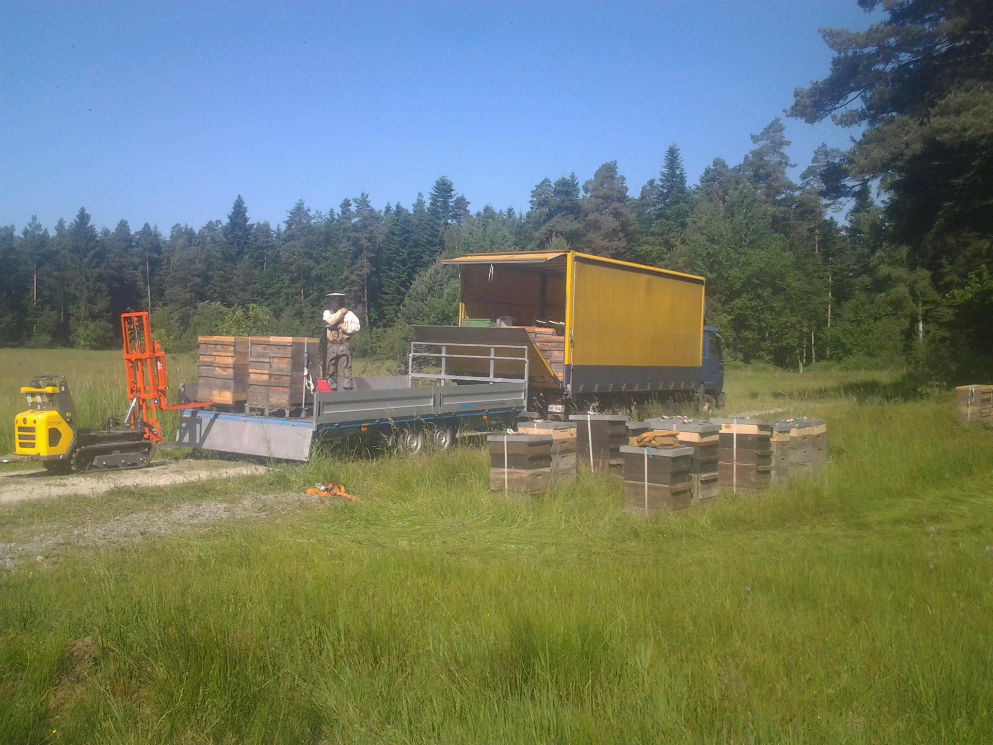 In den frühen Morgenstunden laden wir die Beuten ab und öffnen die Fluglöcher wieder.  Dann können die Bienen in den Nektarreichen Gebieten auf ihre  Sammelflüge gehen...