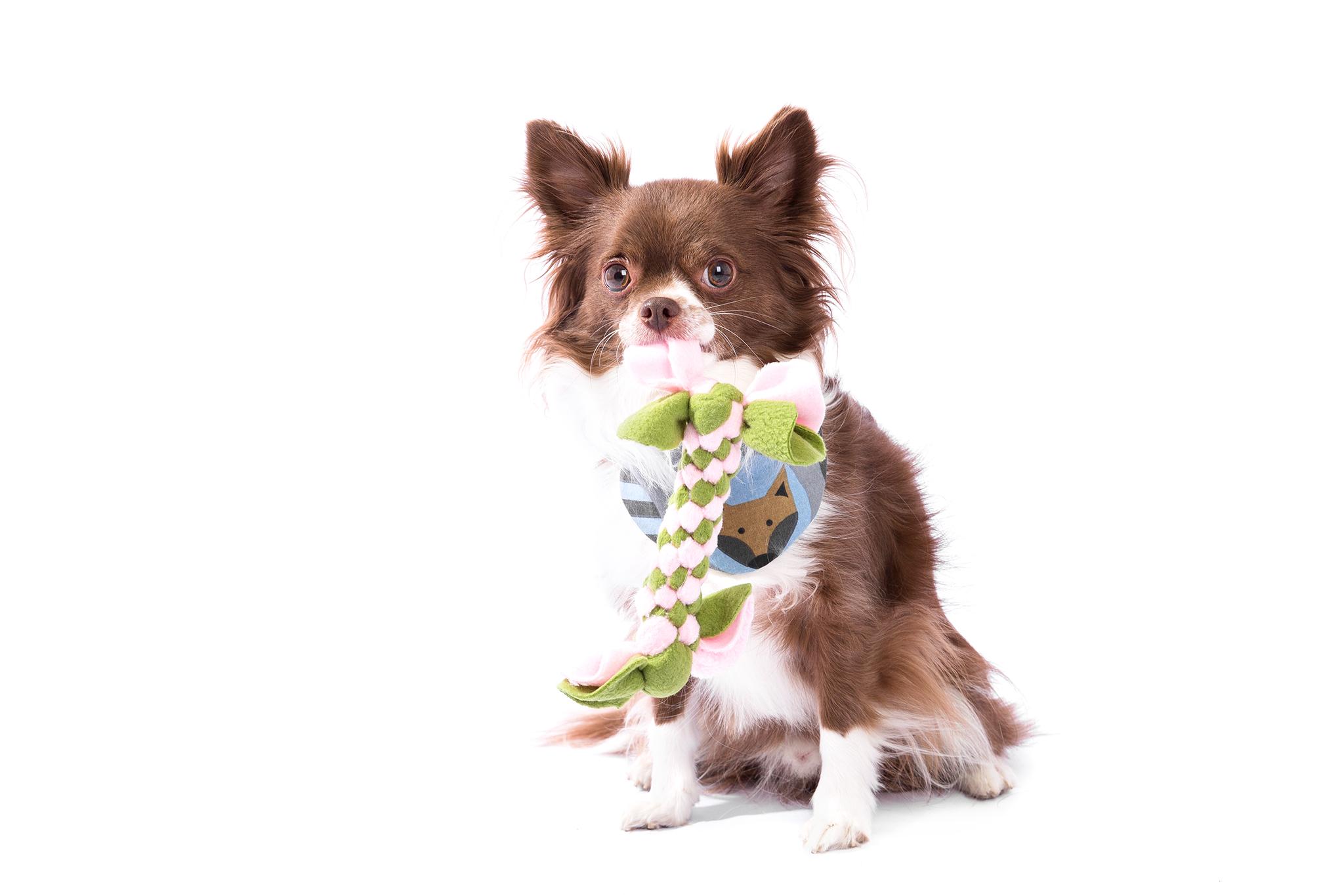 Finn mit Zergel extra für kleine Hunde/ Welpen, bitte zwei bis vier Fleecestoff- Farben auswählen!
