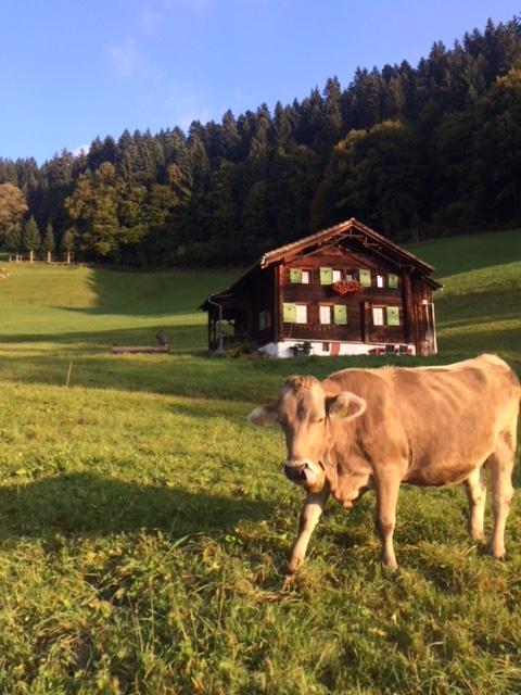 Alme, meine Kuh