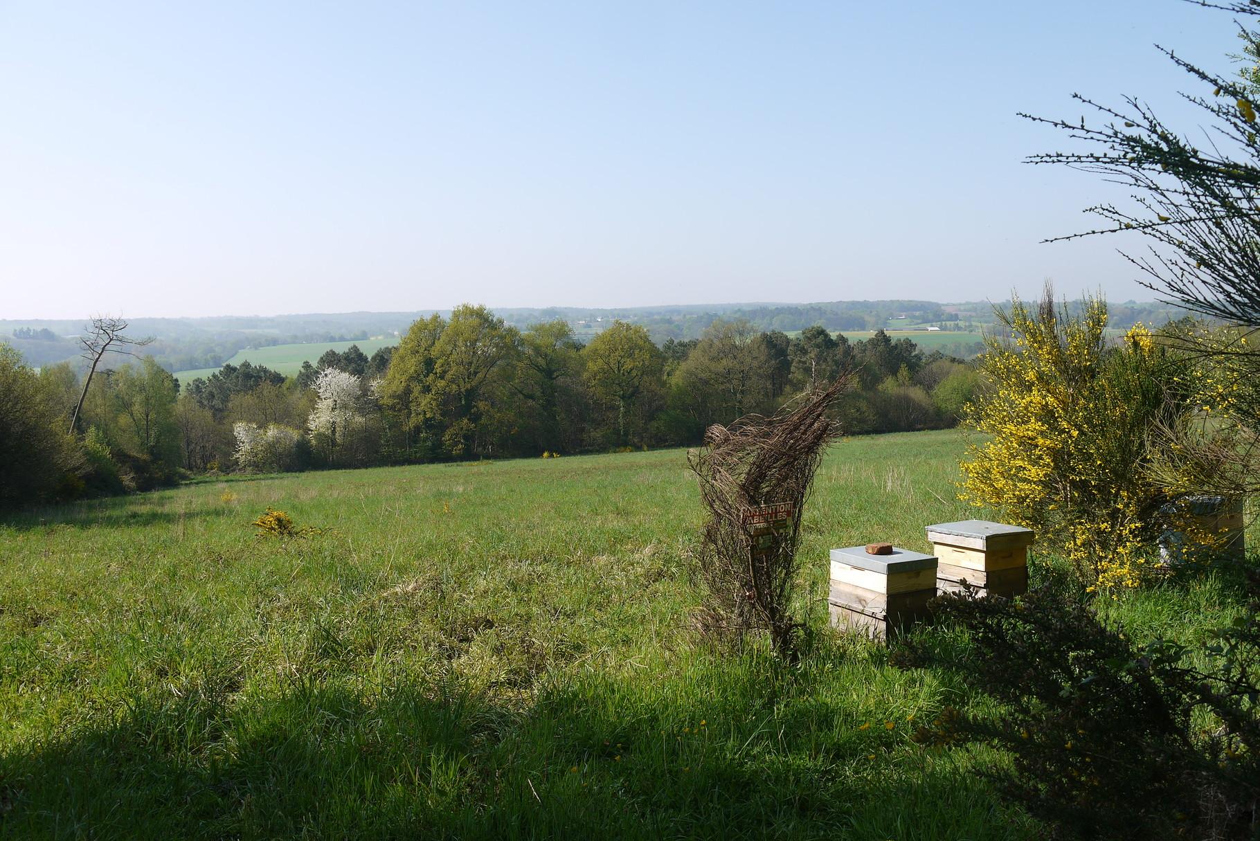 Miel, pain d'épices, nougats des landes de Lanvaux, Morbihan