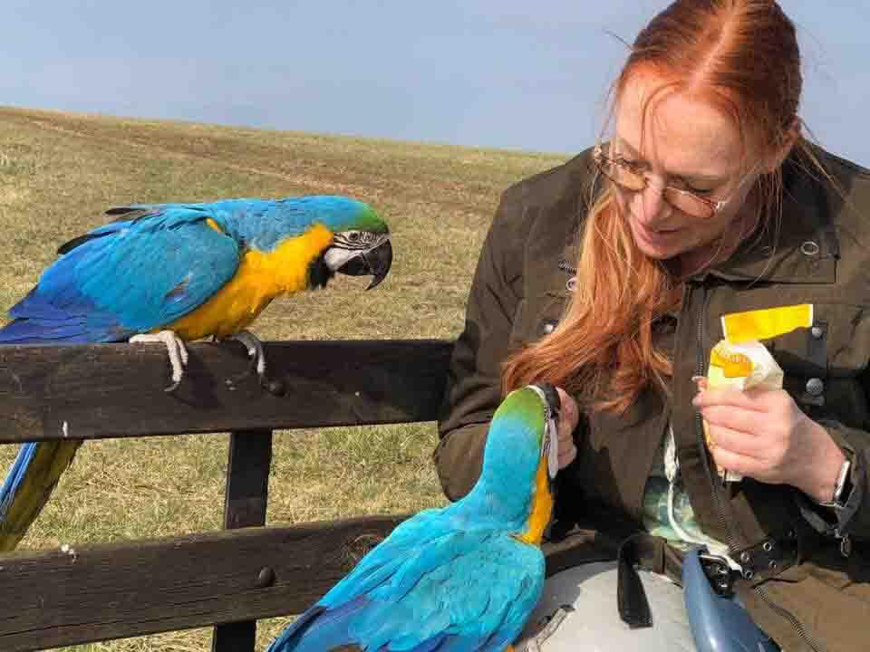 Papageien- und Sittichfütterung!